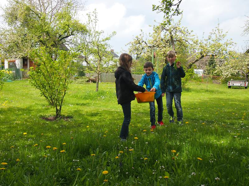 Kinder Kochkurs - Lenny, Noah und Jakob sammeln Wildkräuter